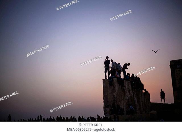 Young people, wall, city wall, bird, gull, Gnaoua World Music Festival, Essaouira, Morocco, lifestyle, evening mood