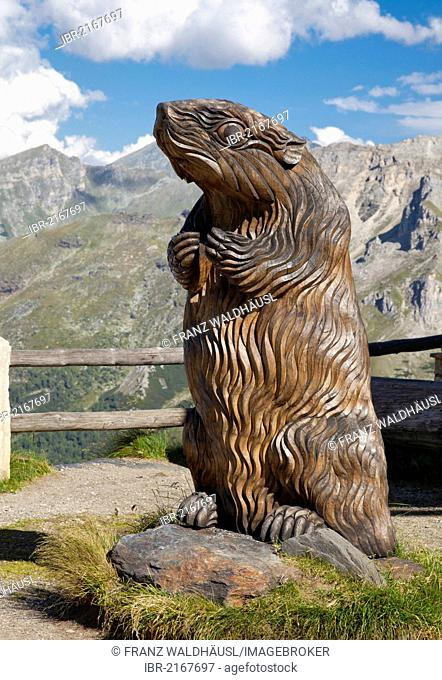 Carved marmot at Fuscher Lacke lake, Grossglockner High Alpine Road, Hohe Tauern National Park, Austria, Europe