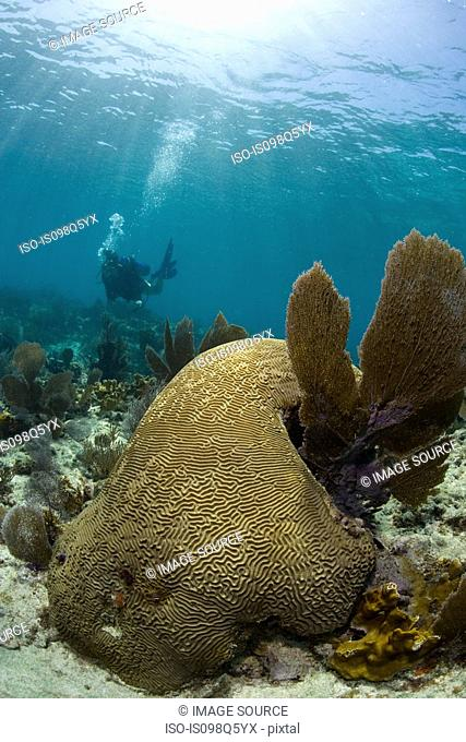 Close-up of brain coral