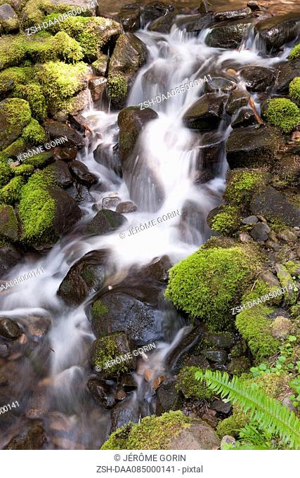 Water flowing over mossy rocks, Olympic National Park, Washington, USA