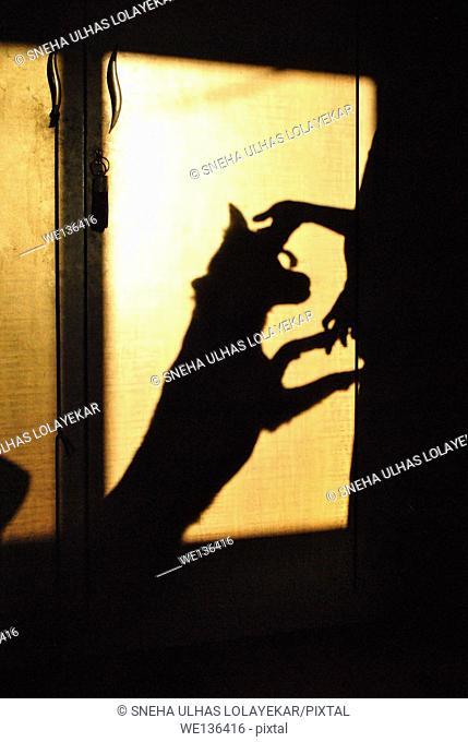 Human and dog, shadow on cupboard,poona,Maharashtra,India
