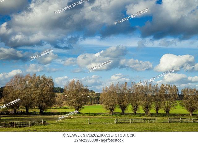 A row of willows in Kashubian Landscape Park near Goreczyno, pomorskie province, Poland