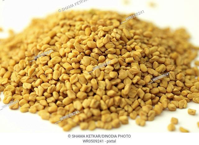 Spices , fenugreek seeds methi trigonella foenumgraecum on white background