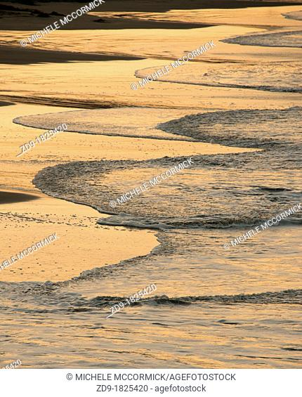 The incoming curves of the ocean waters turn golden in the dawn