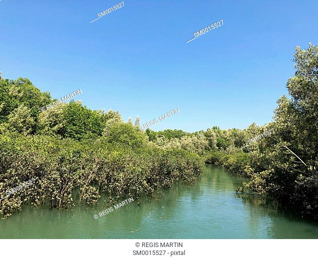Mangrove in Darwin Harbour, Northern Territory, Australia