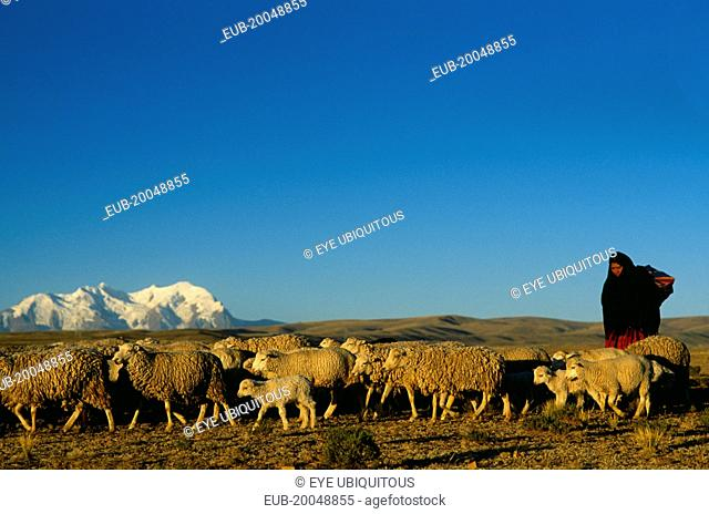 Quechua woman with flock of sheep and Illimani mountain peak behind