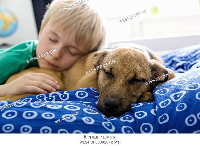 Boy and dog lying on bed