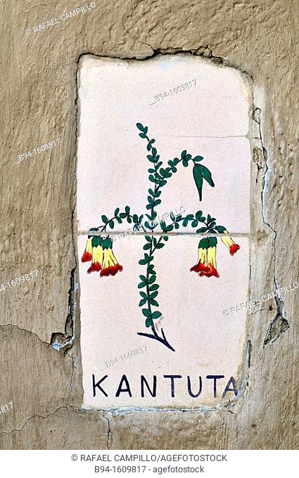 Kantuta representation. Cantua buxifolia, is a flowering plant found in the high valleys of the yungas. It is the national flower of Peru and one of two...