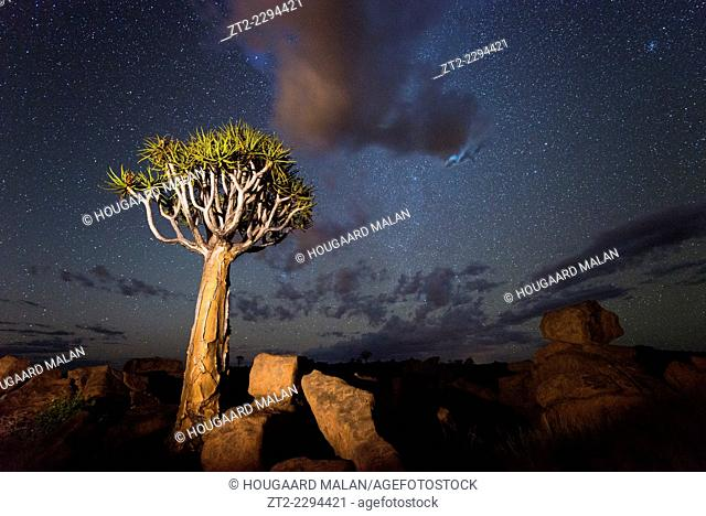 Landscape photo of quiver trees below a night sky. Quiver Tree Forest, Keetmanshoop, Namibia