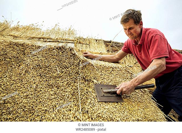 Man thatching a roof, dressing the thatch using a leggett