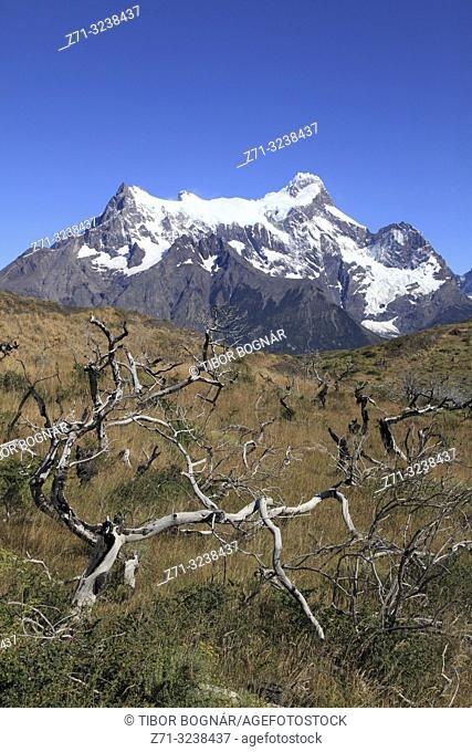 Chile, Magallanes, Torres del Paine, national park, Paine Grande,