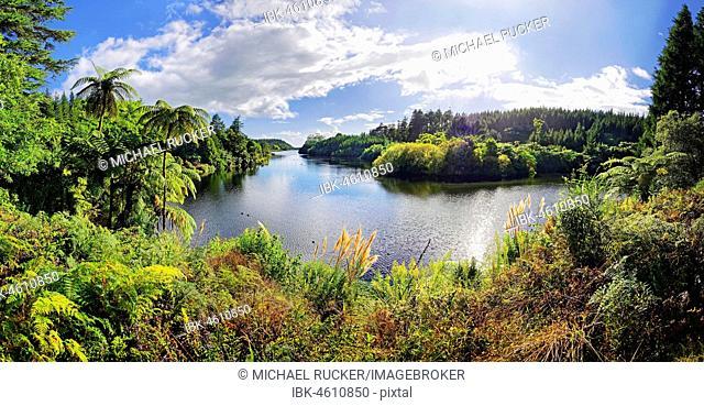 Idyllic lake in the middle of tropical rainforest, Lake Mangamahoe, Whanganui National Park, North Island, New Zealand