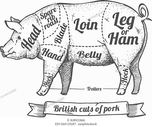 Butchers Diagram Pig Stock Photos And Images