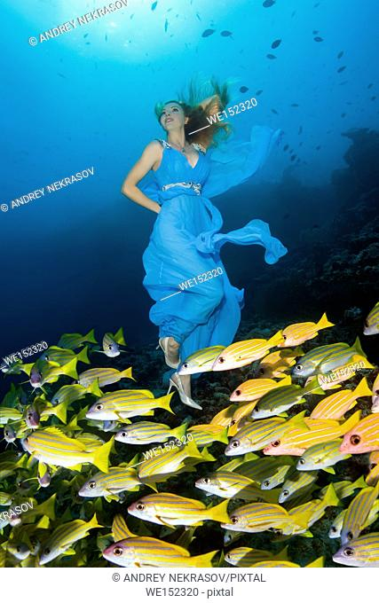 Young beautiful woman in blue dress with school of fish Bluestripe Snapper (Lutjanus kasmira) in Indian Ocean, Maldives