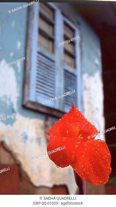 Flower and window, Ilha Grande, RJ