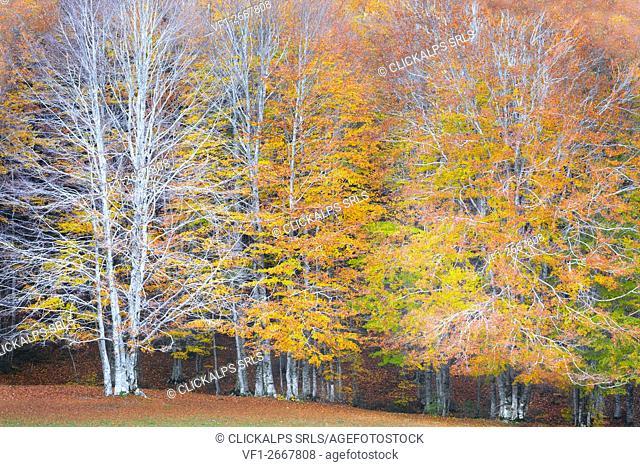 Sila National Park, Sila, Crotone, Calabria, Italy