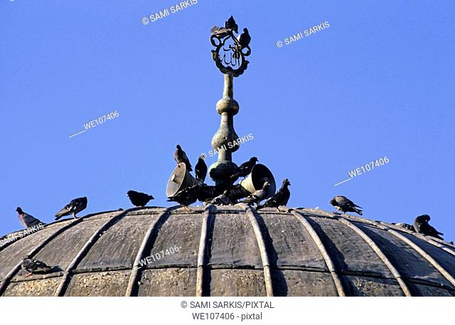 Pigeons on the dome of a mosque, Izmir, Turkey