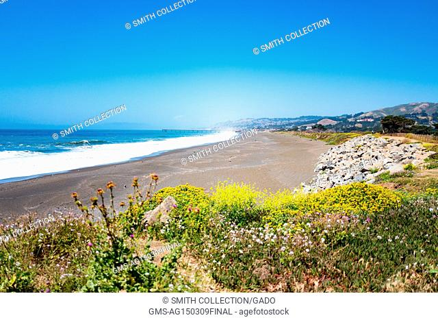 Beach with crashing waves and wildflowers at Mori Point, part of the Golden Gate National Recreation area, in Pacifica, California, June 20, 2017