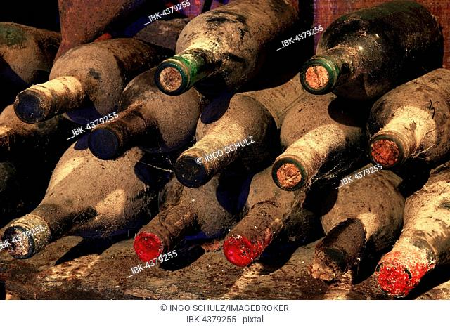 100 year old wine bottles in wine cellar, Tenerife, Canary Islands, Spain