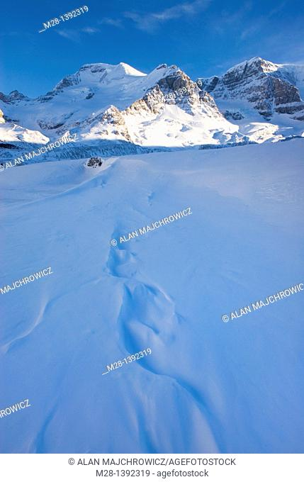Mount Athabasca 3,491 m 11,453 ft in winter seen Sunwapta River, Jasper National Park Alberta Canada