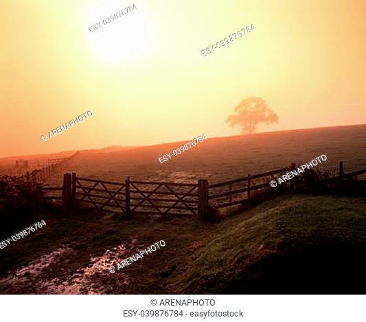 Misty Morning view of farm gate leading into field, Near Blithbury, Staffordshire, England, United Kingdom, Western Europe