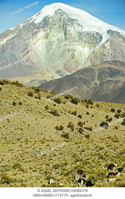 Bolivia, Sajama National Park, Snowcapped volcano Sajama