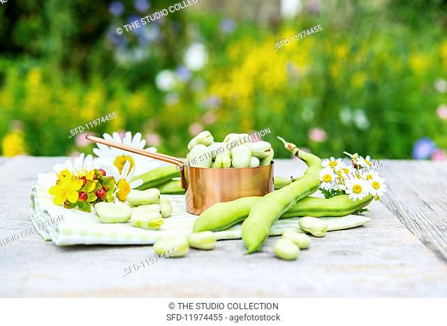 Broad beans in pods and a mini saucepan on a garden table