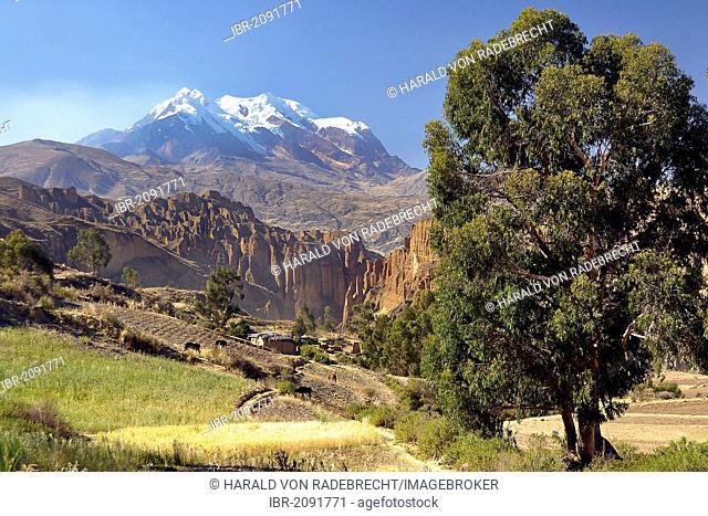 Palca canyon and the Illimani mountain, Altiplano high plateau, Andes mountain range, La Paz, Bolivia, South America