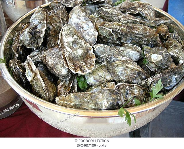 Fresh oysters in bowl