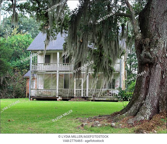 An old abandoned house, surrounded by Spanish Moss covered oak trees, in Houma, Louisiana, has survived from the late 1800's into the early 2000's