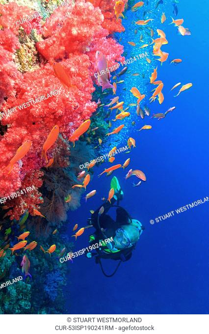 Diver admiring fish in coral reef