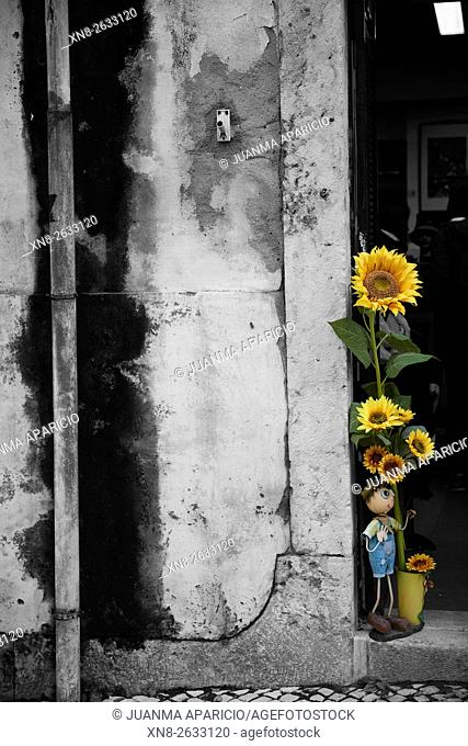 Photograph in black and white mixed with colour of Sunflower, Lisbon, Portugal, Europe