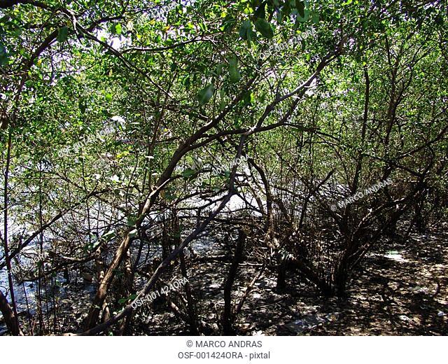 pernmabuco trees forest vegetation