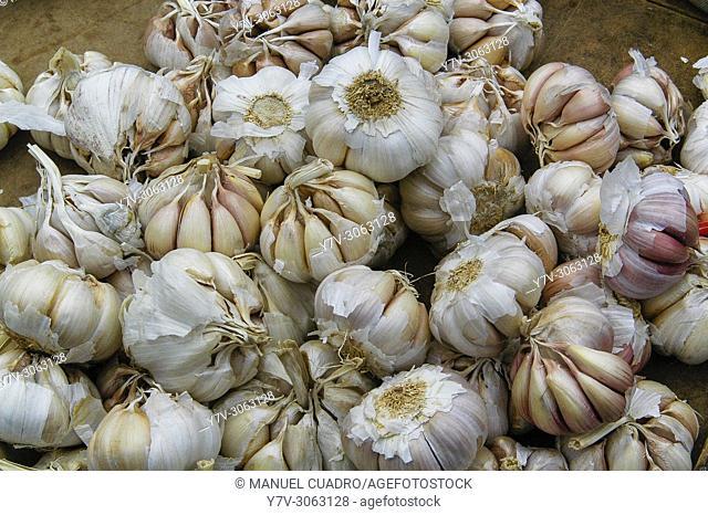 Garlic. Market, Santiago de Compostela, La Coruña, Galicia, Spain