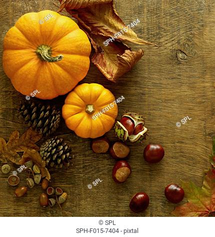 Pumpkins, pine cones, conkers and autumn leaves, still life