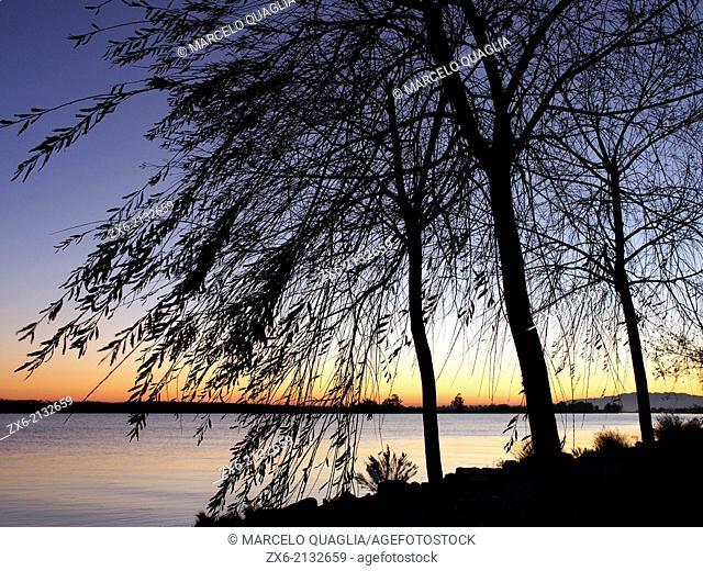 Twilight backlit Weeping willow trees (Salix babylonica) along Ebro River coastline. Ebro River Delta Natural Park, Tarragona province, Catalonia, Spain