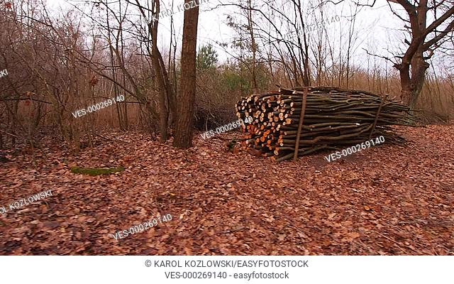 Wooden Log Stacks for Forestry Industry along the Forest Road near Lublin, Lubelskie, Poland