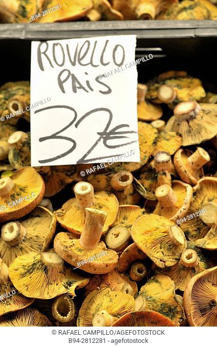 Mushrooms. Rovellons, Saffron Milk-cap at Sant Josep aka la Boqueria market, Barcelona. Catalonia, Spain