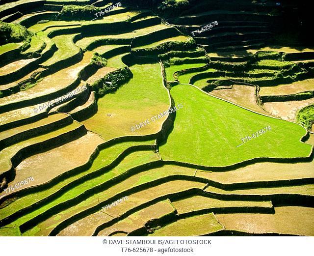 northern Philippines amazing rice terraces, near Banaue, Luzon