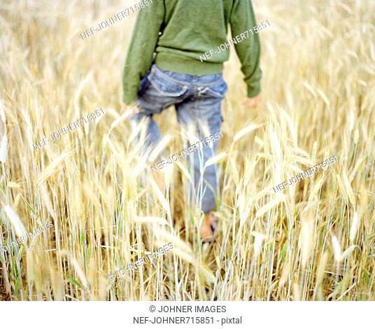 Boy in a field of corn, Sweden
