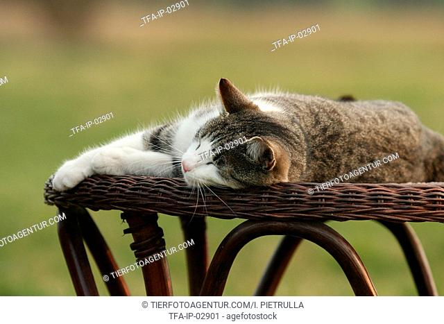 spleeping cat