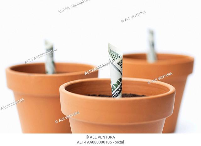One-hundred dollar bills planted in flower pots