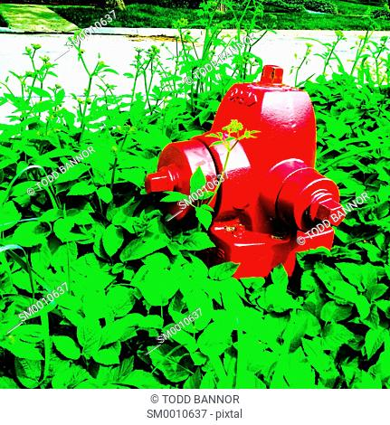 Fire hydrant overgrown with weeds