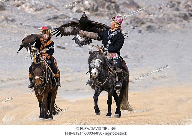 Kazakh hunters on horseback, with hooded Golden Eagles Aquila chrysaetos, on route to Eagle Hunters Festival, Bayan-Ulgii, Western Mongolia, october