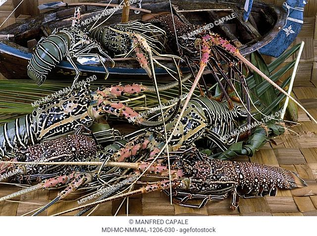 Sea crayfishes from the Indian Ocean
