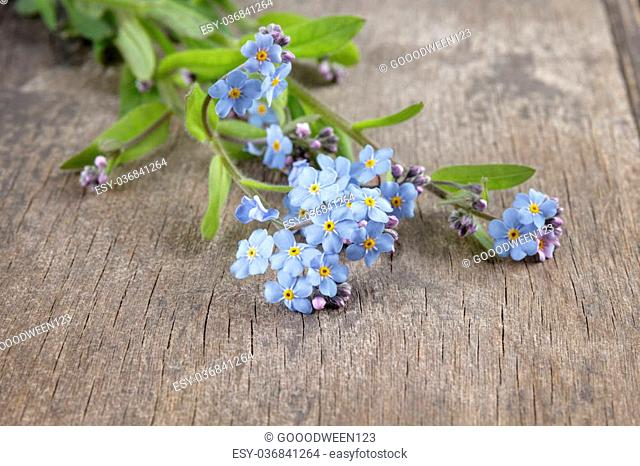 forget-me-nots on wooden table, rustic style