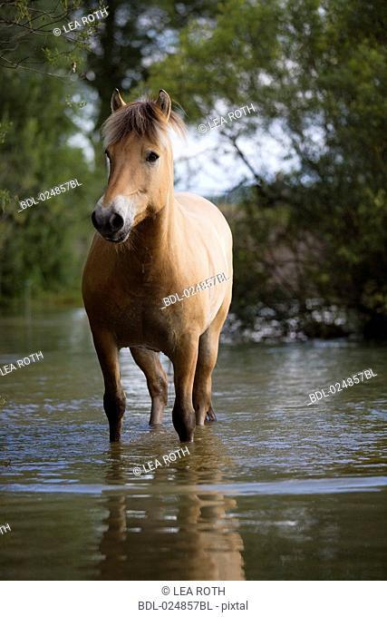 brown horse standing in water