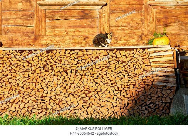 House, Emmental, timber house, cat, pumpkin, firewood, firewood pile, Scheiterbeige, energy wood, Oil of Emmental, solar bath, pile of wood, tortoiseshell