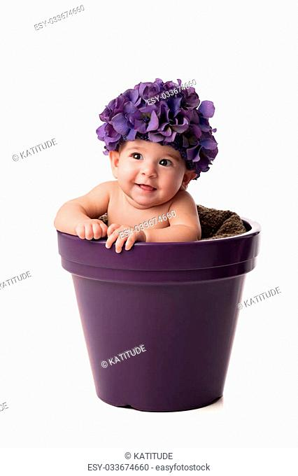 A smiling 6 month old baby girl wearing a purple, hydrangea flower hat and sitting in a purple flower pot. Shot in the studio on an isolated white background
