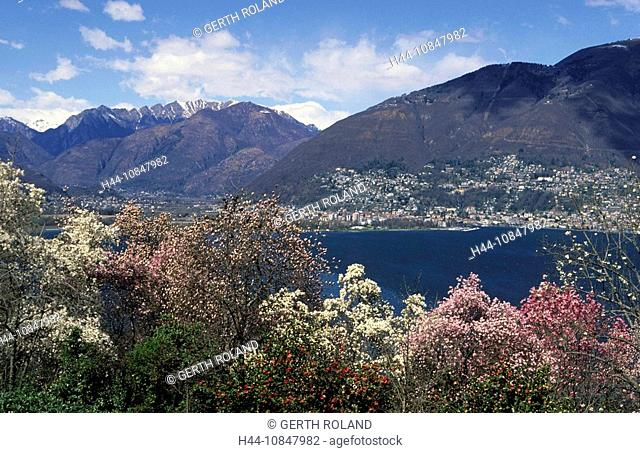 Switzerland, Europe, Canton Ticino, Lago Maggiore, lake, water, Vairano, trees, magnolias, lake, water, spring, mounta